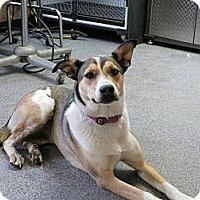 Adopt A Pet :: Sierra - Westbank, BC