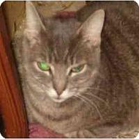 Adopt A Pet :: Mia - Bedford, MA