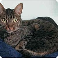 Adopt A Pet :: Memphis - Davis, CA