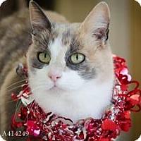 Adopt A Pet :: Danica - Sacramento, CA