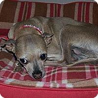 Adopt A Pet :: Pearl ~ Sadie's Rescue - San Angelo, TX