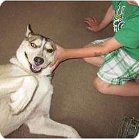Adopt A Pet :: Cheyenne - Jacksonville, NC