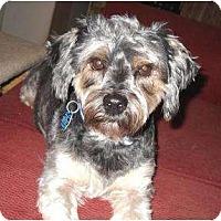 Adopt A Pet :: Bam Bam - Conroe, TX