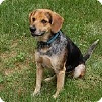 Adopt A Pet :: Blarney - PORTLAND, ME