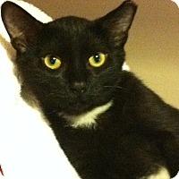 Adopt A Pet :: Bo - Alexandria, VA