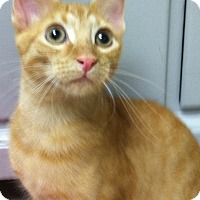 Adopt A Pet :: Paddington - Bensalem, PA