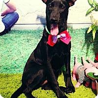 Adopt A Pet :: Fiona - Penngrove, CA
