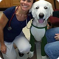 Adopt A Pet :: Hercules - NY - Lee, MA