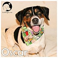 Adopt A Pet :: Oscar - Pittsburgh, PA