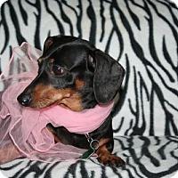 Adopt A Pet :: PeeWee - Sioux Falls, SD