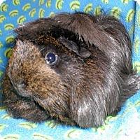 Adopt A Pet :: Brandy - Steger, IL