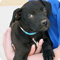 Adopt A Pet :: Fred - Palmdale, CA