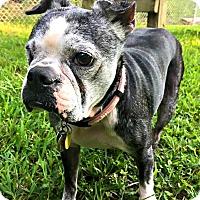 Adopt A Pet :: Lulu - Greensboro, NC