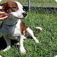 Adopt A Pet :: Buster - Lebanon, CT