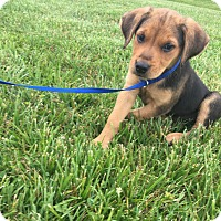 Adopt A Pet :: Oakley - Hohenwald, TN