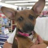 Adopt A Pet :: Roxy - Rocky Mount, NC