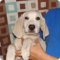 Adopt A Pet :: Charmin - Oviedo, FL