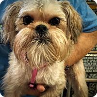 Adopt A Pet :: Georgie - Memphis, TN