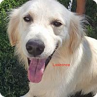 Adopt A Pet :: Lawrence - BIRMINGHAM, AL