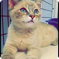 Adopt A Pet :: Tai - yuba city, CA