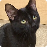 Adopt A Pet :: Lovey - Houston, TX