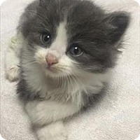 Adopt A Pet :: Pearl - Vallejo, CA