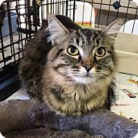 Adopt A Pet :: Harmonie - Orange, CA