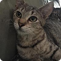 Adopt A Pet :: Tabitha - Melbourne, FL