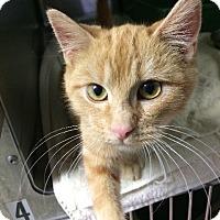 Adopt A Pet :: Baron - St. Louis, MO