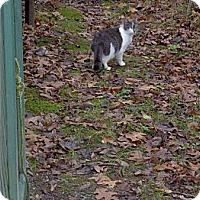 Adopt A Pet :: FOUND! - Halifax, NS