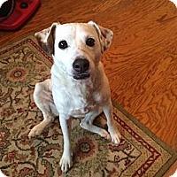 Adopt A Pet :: Lola in San Antonio - Austin, TX