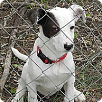 Adopt A Pet :: Pirate - Centerpoint, IN