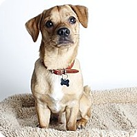 Adopt A Pet :: Lucky - Oakland, CA