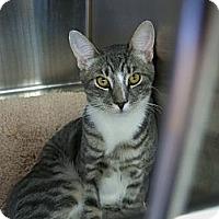 Adopt A Pet :: Hans - Secaucus, NJ