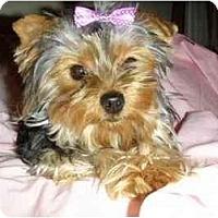 Adopt A Pet :: Abigayle - Mooy, AL