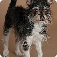 Adopt A Pet :: Eugene - Phoenix, AZ