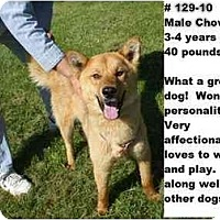 Adopt A Pet :: # 129-10 @ Animal Shelter - Zanesville, OH