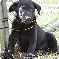 Adopt A Pet :: Grayson - New Boston, NH