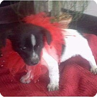 Adopt A Pet :: Aspen - Lexington, TN
