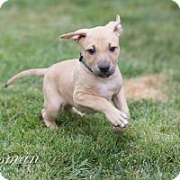 Adopt A Pet :: Chai - Southampton, PA