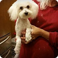 Adopt A Pet :: Paige - Santa Ana, CA