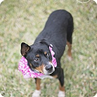 Adopt A Pet :: Mamma Mia - Kingwood, TX