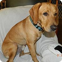 Adopt A Pet :: Cooper - Umatilla, FL