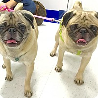 Adopt A Pet :: Odie and Spud - Rockville, MD