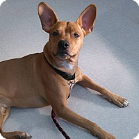 Adopt A Pet :: Jake - Columbus, OH
