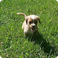 Adopt A Pet :: Ms. Potts~adopted! - Glastonbury, CT