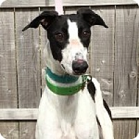 Adopt A Pet :: CALS MISS TARA JO - Grandville, MI