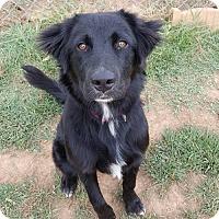 Adopt A Pet :: Fluff - Scottsboro, AL