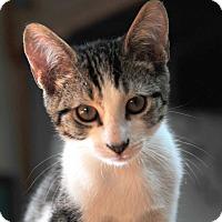 Adopt A Pet :: Galileo - Waterbury, CT