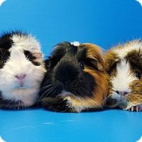 Adopt A Pet :: Tammie, McKenna and Karli - Lewisville, TX